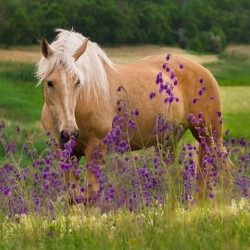 Fragrance Card Horse in Flowers